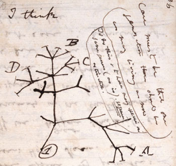 Darwin's 1837 sketch of an idea for how life is inter-related. Darwin was an avid studier of plants. Image Source: http://www.nhm.ac.uk/nature-online/evolution/tree-of-life/darwin-tree/