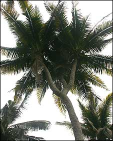 _44613678_coconut1