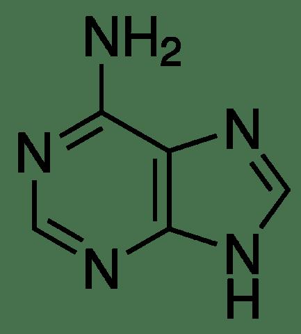 The Discovery of Cytokinin. (4/5)