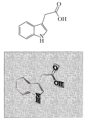 The most common auxin plants use, Indole 3-acetic acid (IAA). Top: The molecule. Bottom: my creative rendering of auxin.