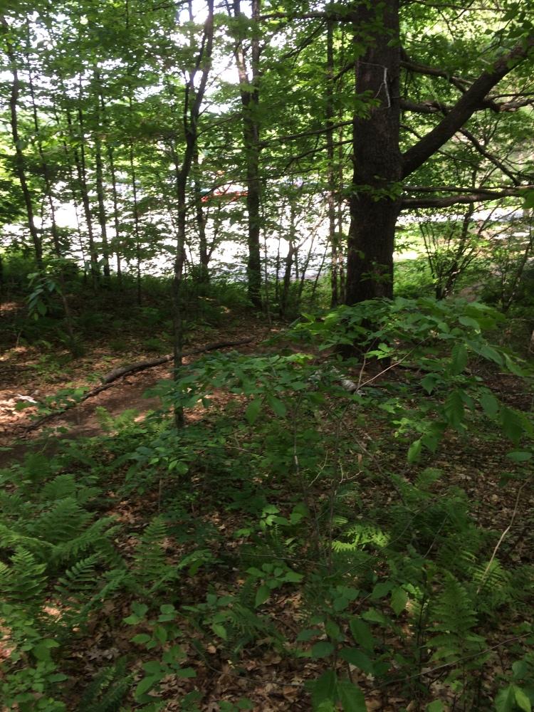 Nature walk. (3/6)