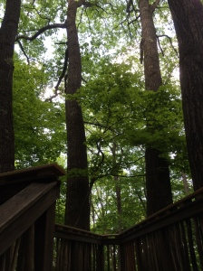Forest canopy viewing platform.