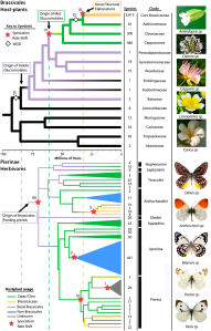Figure 1 from Edger et al. 2015 (see references). An alignment of brassicales & butterfly evolution. The dashed vertical lines represent times when novel plant toxins evolved. Note how butterfly species  radiate after the novel toxins evolve.