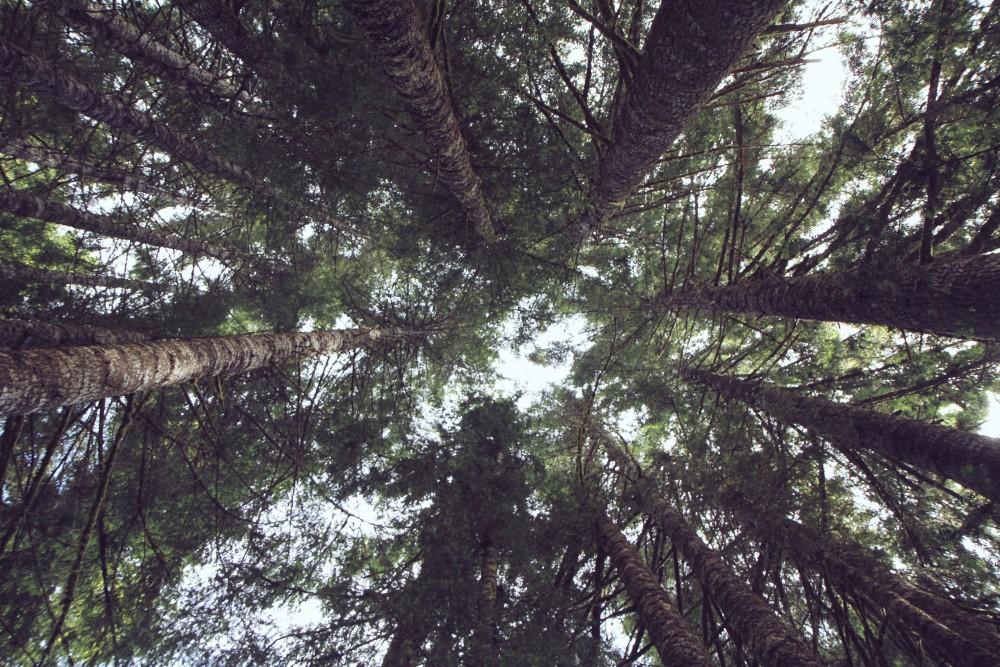 Bringing back a forest.