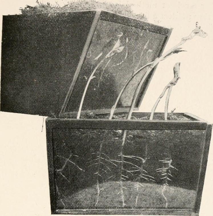 A plant growth box including rhizotron, a descendant of the GLO-roots version. Image from page 132 of