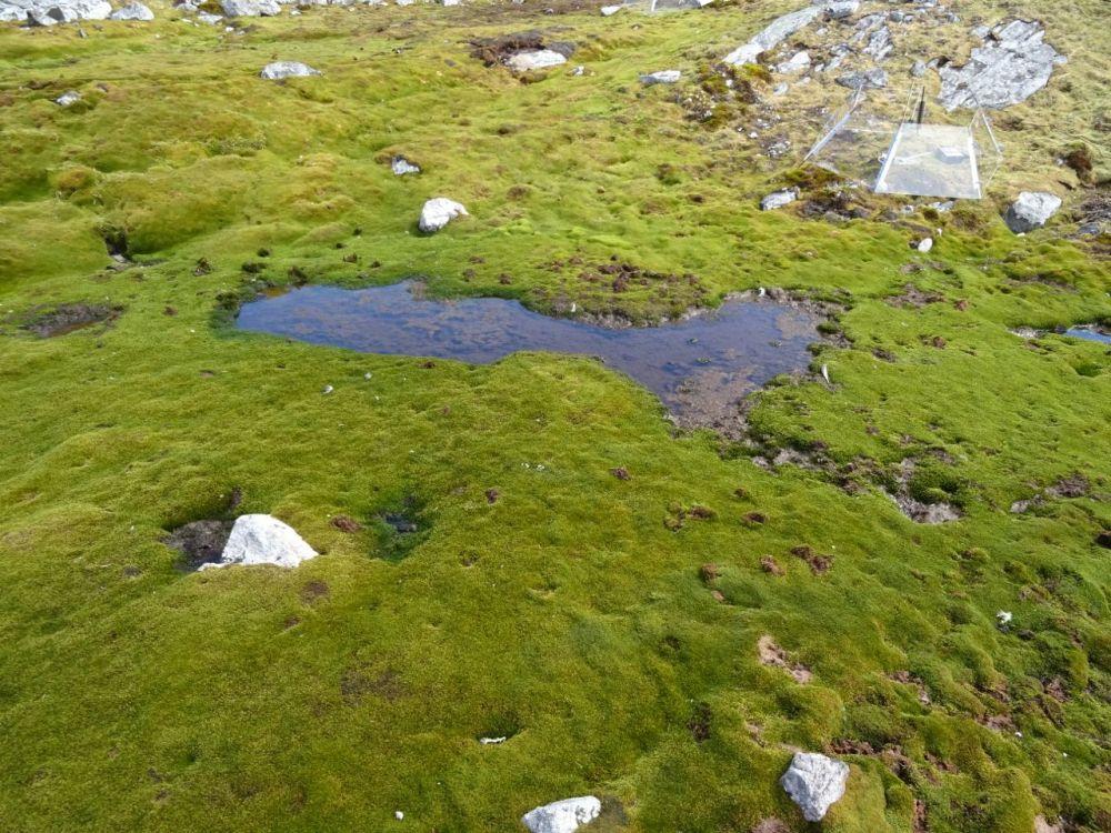 Moss – tiny plants, huge potential (3/6)