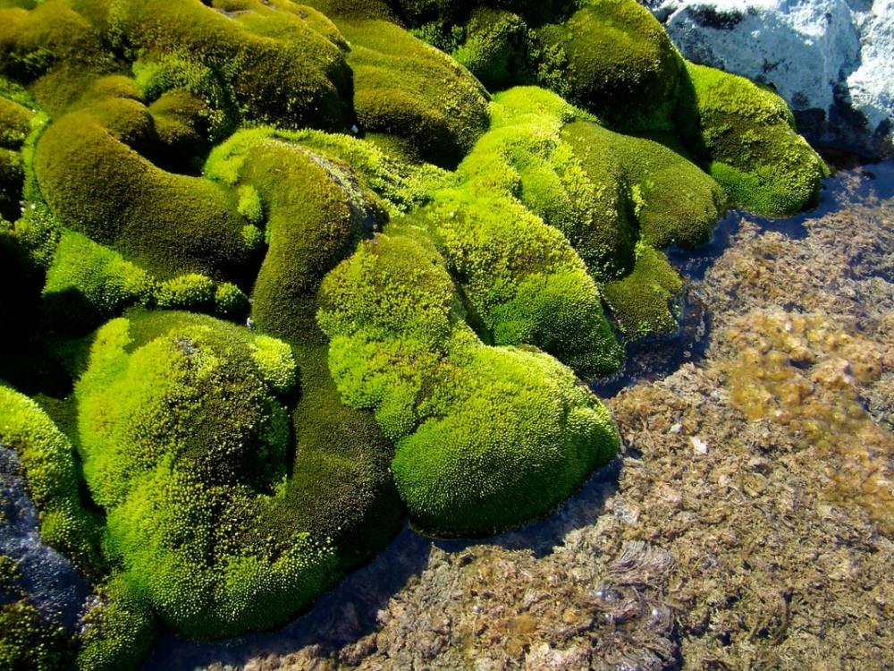 Moss – tiny plants, huge potential (1/6)