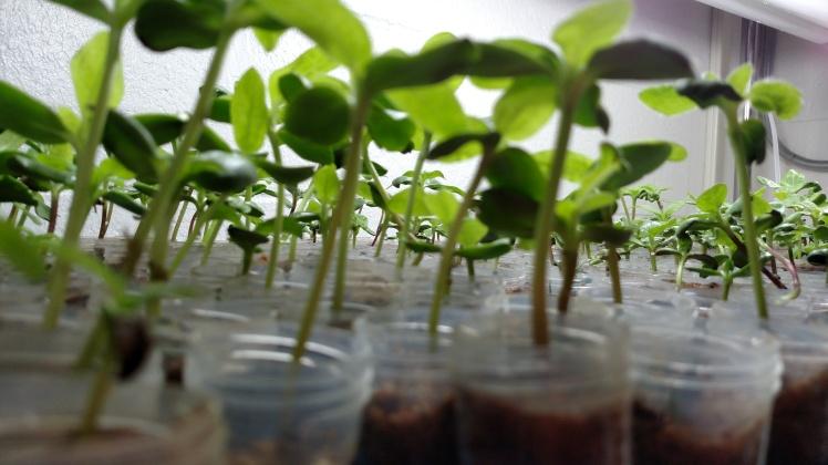 seedlings_lowangle