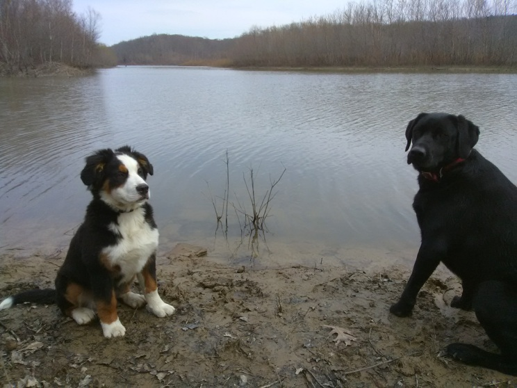 Dogs ready to explore